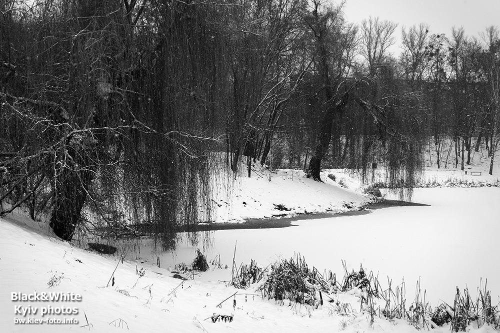 Заснеженное озеро в парке Нивки.Snowy lake in the park Nivki