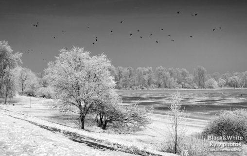 Зимняя Оболонь