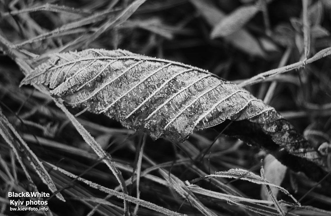 Осенняя изморозь или утро 1-го ноября